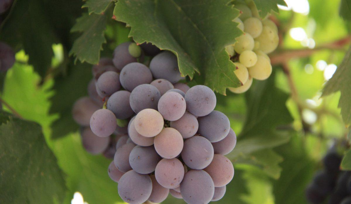 Wine & Whitewater in Mendoza