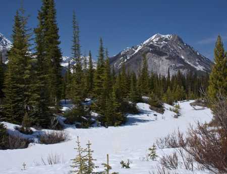 Best Beginner Snowshoe Trails in Kananaskis
