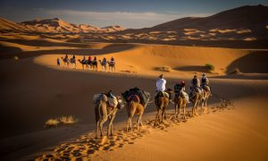 Bucket List: Ride a Camel in the Sahara Desert